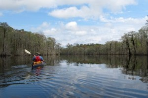 The Waccamaw is home to a unique array of species and habitats and an important resource for fishing and recreation.
